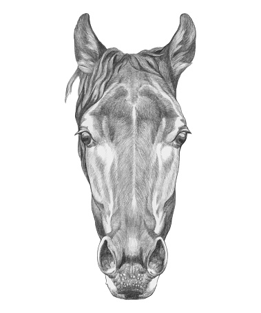 Portrait of Horse. Hand-drawn illustration. Vector isolated elements.