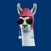 Comic portrait of a llama in a peruvian hat and black glasses. Vector illustration isolated on blue background