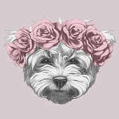 Portrait of Maltese with floral head wreath. Hand-drawn illustration of dog.