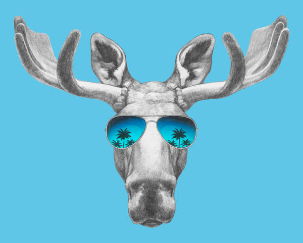 Portrait of Moose with sunglasses. Hand-drawn illustration. Vector isolated elements. Vector isolated elements. moose stock illustrations