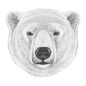 Portrait of Polar Bear. Hand drawn illustration. Vector isolated elements.