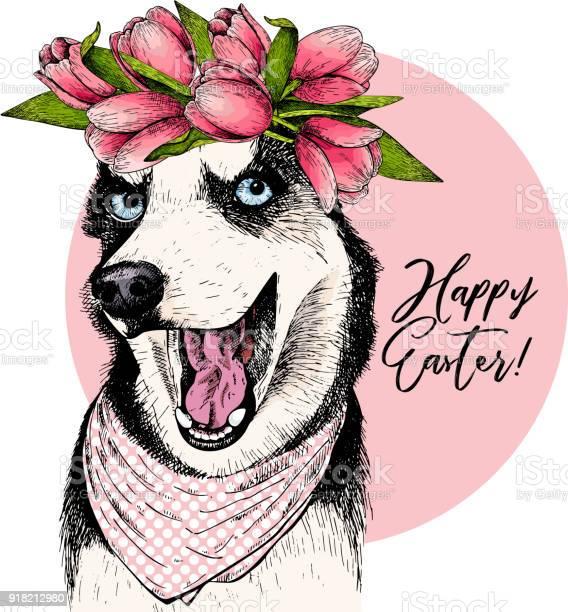 Portrait of siberian husky dog wearing tulip crown and bandana hand vector id918212980?b=1&k=6&m=918212980&s=612x612&h=svsawlcs3aik4tfn8 c1yu3sehbusdk azvp upzomm=