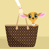 Chihuahua in a fashion handbag. Please see some similar pictures in my lightboxs: