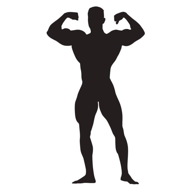 posing bodybuilder front view, standing man with big muscles - symbol seksu stock illustrations