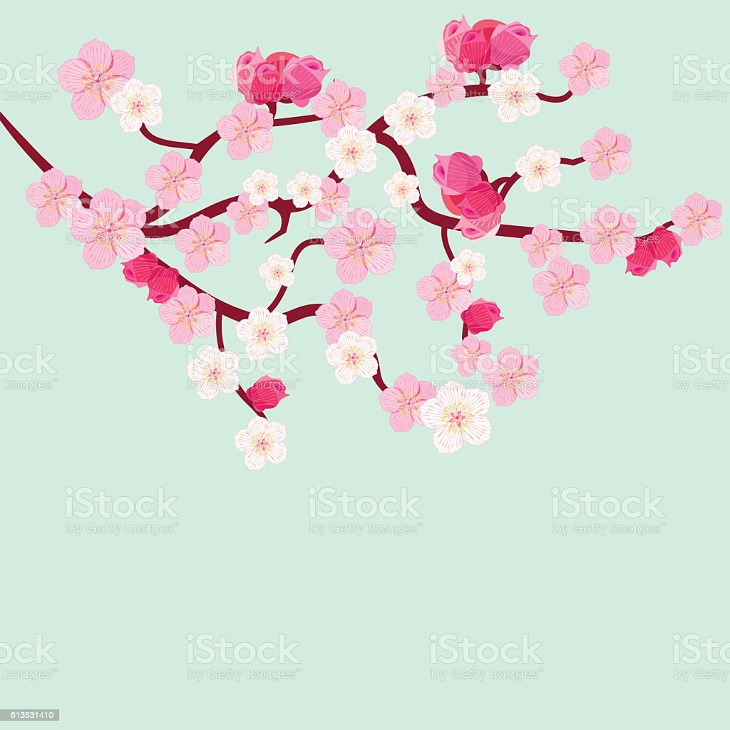 postcard branches of Japanese of the cherry blossoms with buds. vector art illustration