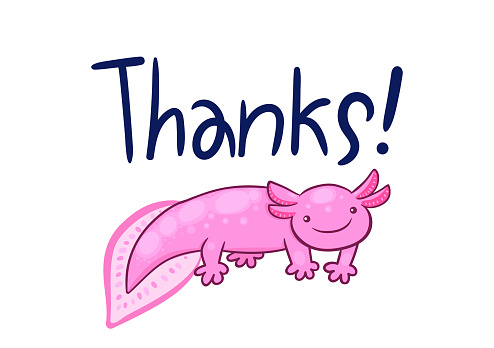 Postcard with axolotl on a white background. Lettering thanks. Vector graphics.