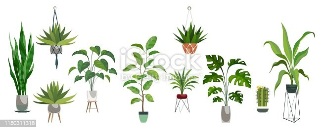 Pot plant set. Plants plastic decorative container and hanging styling indoor basket for potting tree urban garden vector collection