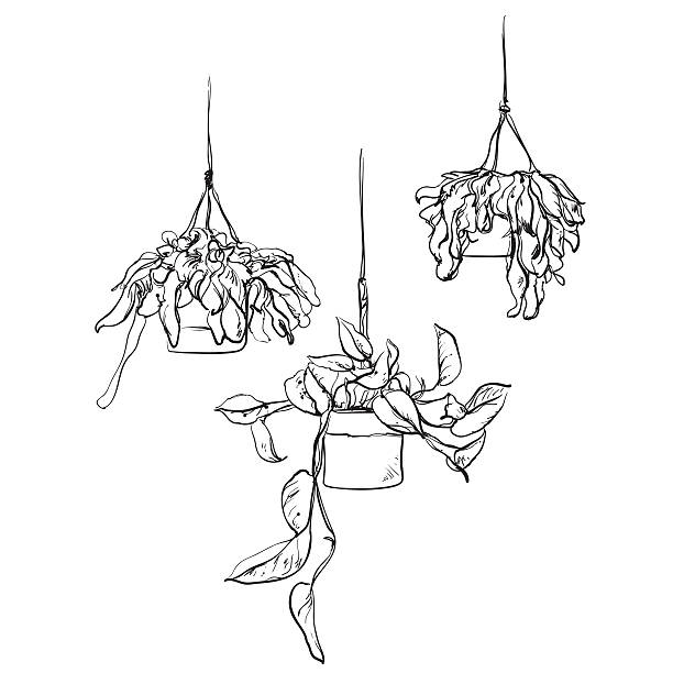 Hanging Planter Illustrations, Royalty-Free Vector