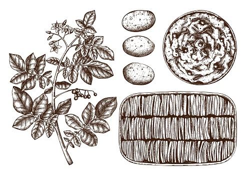 Potato dishes illustration set