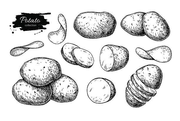 potato drawing set. vector isolated potatoes heap, sliced pieces - kartoffeln stock-grafiken, -clipart, -cartoons und -symbole