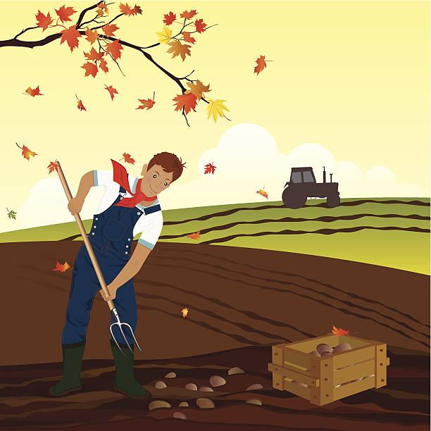 "kartoffel harvest"" - herbstgemüseanbau stock-grafiken, -clipart, -cartoons und -symbole"