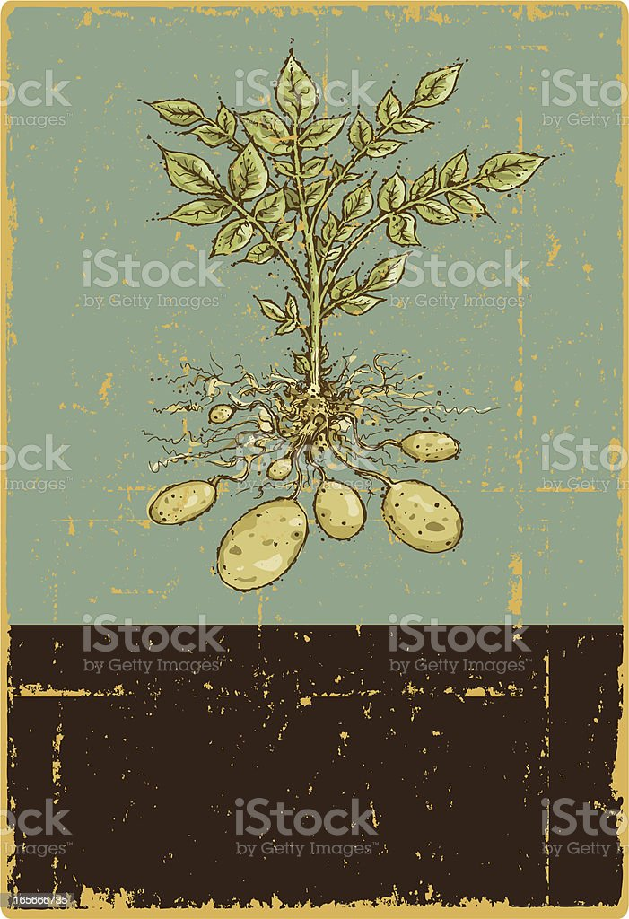 Potato Plant Sign royalty-free stock vector art