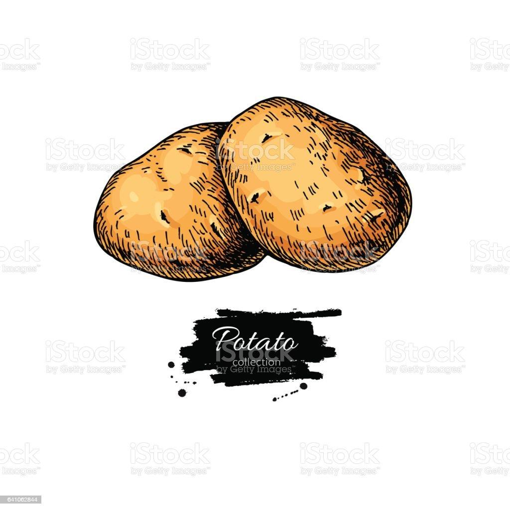 Ilustración De Dibujo Vectorial De Patata Montón De Papas Dibujado