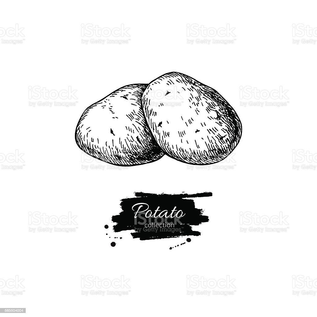 Potato vector drawing. Isolated potatoes heap. Vegetable engrave vector art illustration