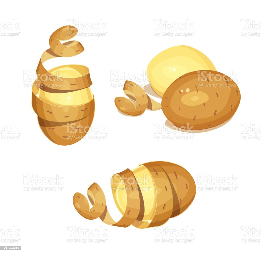 Potatoes with peel. Vegetable foodstuff vector art illustration