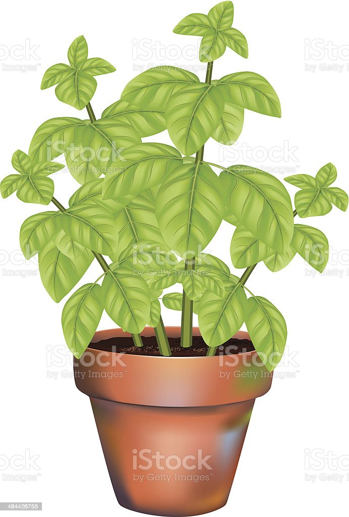 Potted Basil Herb Plant royalty-free stock vector art