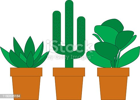 3 potted cactus