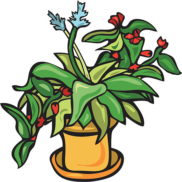 Potted Hosta with Begonias vector art illustration