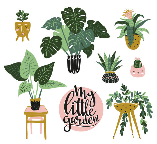 ilustrações de stock, clip art, desenhos animados e ícones de potted  house plants isolated on the white background. vector illustration with stylish lettering - my little garden. - home decor boho