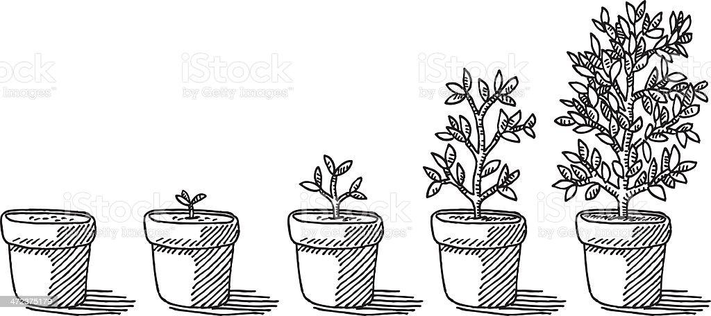 Plante En Pot De Développement Timelapse Dessin Vecteurs