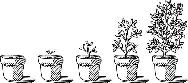 Potted Plant Growing Timelapse Drawing Hand-drawn vector drawing of a Potted Plant Growing Timelapse. Black-and-White sketch on a transparent background (.eps-file). Included files are EPS (v10) and Hi-Res JPG. environment stock illustrations