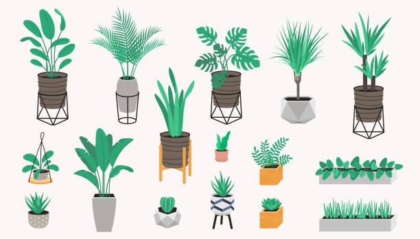 Topfpflanzen-Kollektion im Loft-Stil. Sukkulenten, Kaktus und Hauspflanzen. Satz von Haus Indoor-Pflanze Vektor – Vektorgrafik