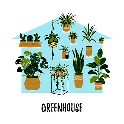 Potted plants growing in a greenhouse. Home garden concept. Vector illustration in a flat style