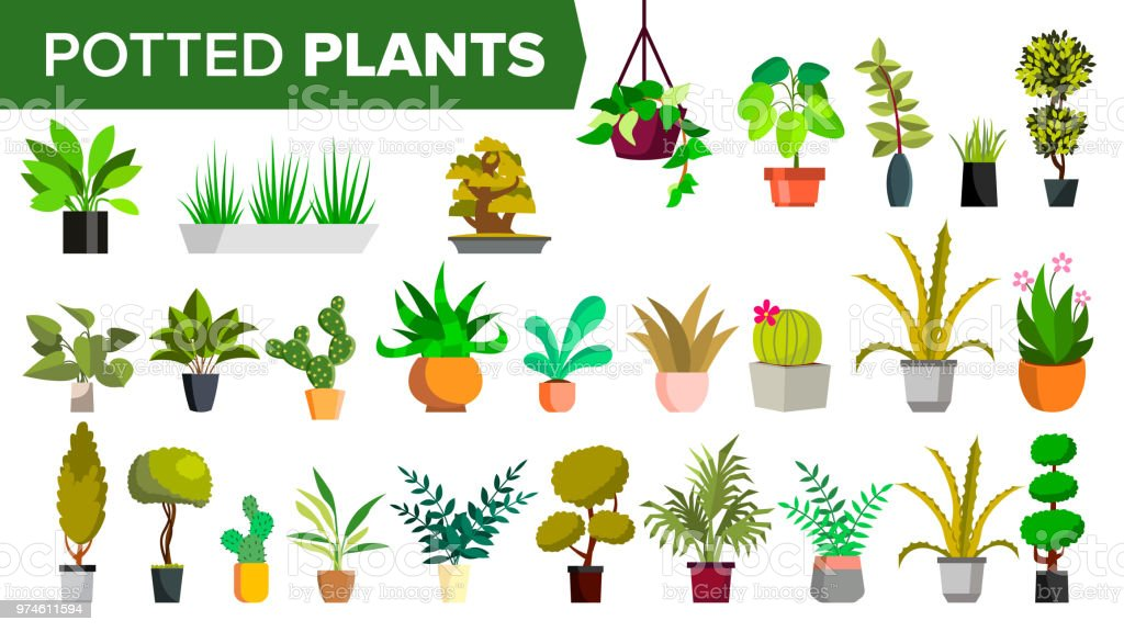Indoor home office plants royalty Background Vector Potted Plants Set Vector Green Color Plants In Pot Indoor Home Office Modern Houseplants Various Floral Interior Icon Decoration Design Element Istock Potted Plants Set Vector Green Color Plants In Pot Indoor Home