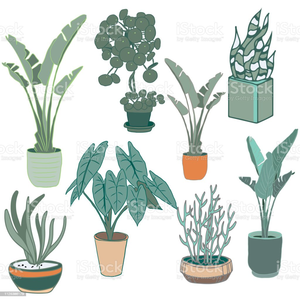Indoor home office plants royalty Set Vector Potted Plants Set Vector Indoor Home Office Modern Style Houseplants Vector Art Illustration Istock Royalty Free Silhouette Icons Of Houseplants Indoor And Office