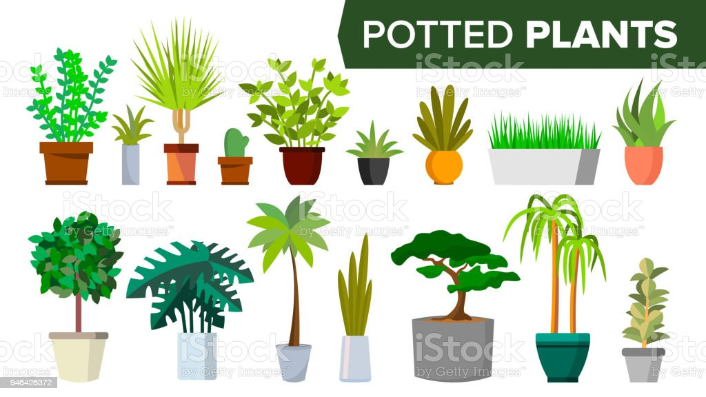 Potted Plants Set Vector. Indoor Home, Office Modern Style Houseplants. Green Color Plants In Pot. Various. Floral Interior Icon. Decoration Design Element. Isolated Flat Illustration