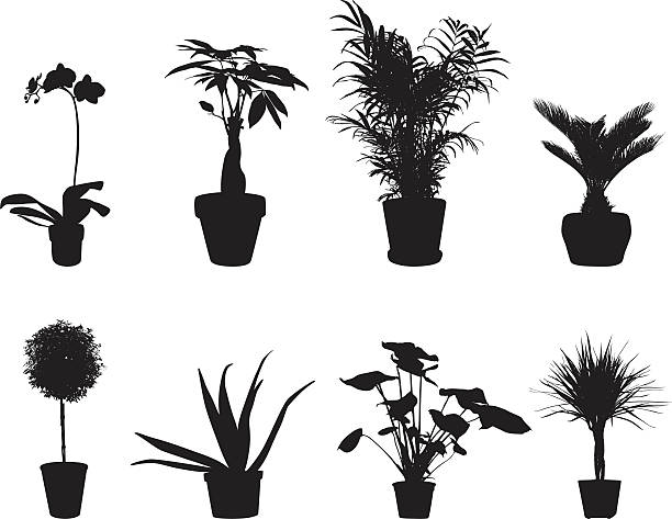 Potted Plants Vector Silhouette vector art illustration