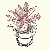 Illustration of a potted succulent plant. Part of a series.