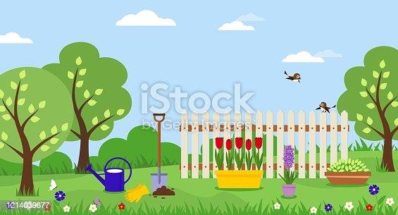 istock Potted tulips. Planting flowers shovel gardening. 1214039677