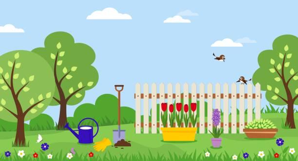 Potted tulips. Planting flowers shovel gardening. Banner with spring landscape. Vector illustration. backyard stock illustrations
