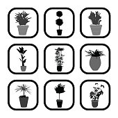 A collage of household plants in decorative pots.