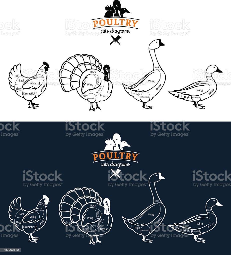Poultry Cuts Diagrams vector art illustration