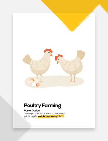 Poultry Farming Concept Flat Design for Posters, Covers and Banners. Modern Flat Design Vector Illustration.