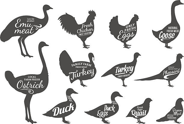 Poultry Silhouettes Collection, Butchery Labels Templates Set of butchery labels templates. Poultry icons with sample text. Poultry silhouettes collection for groceries, meat stores and advertising. Vector labels design. drake male duck stock illustrations