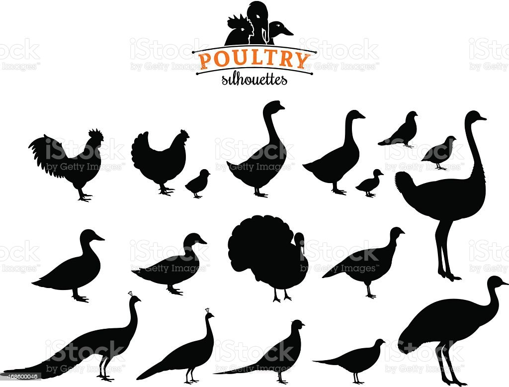 Poultry Silhouettes Isolated on White vector art illustration