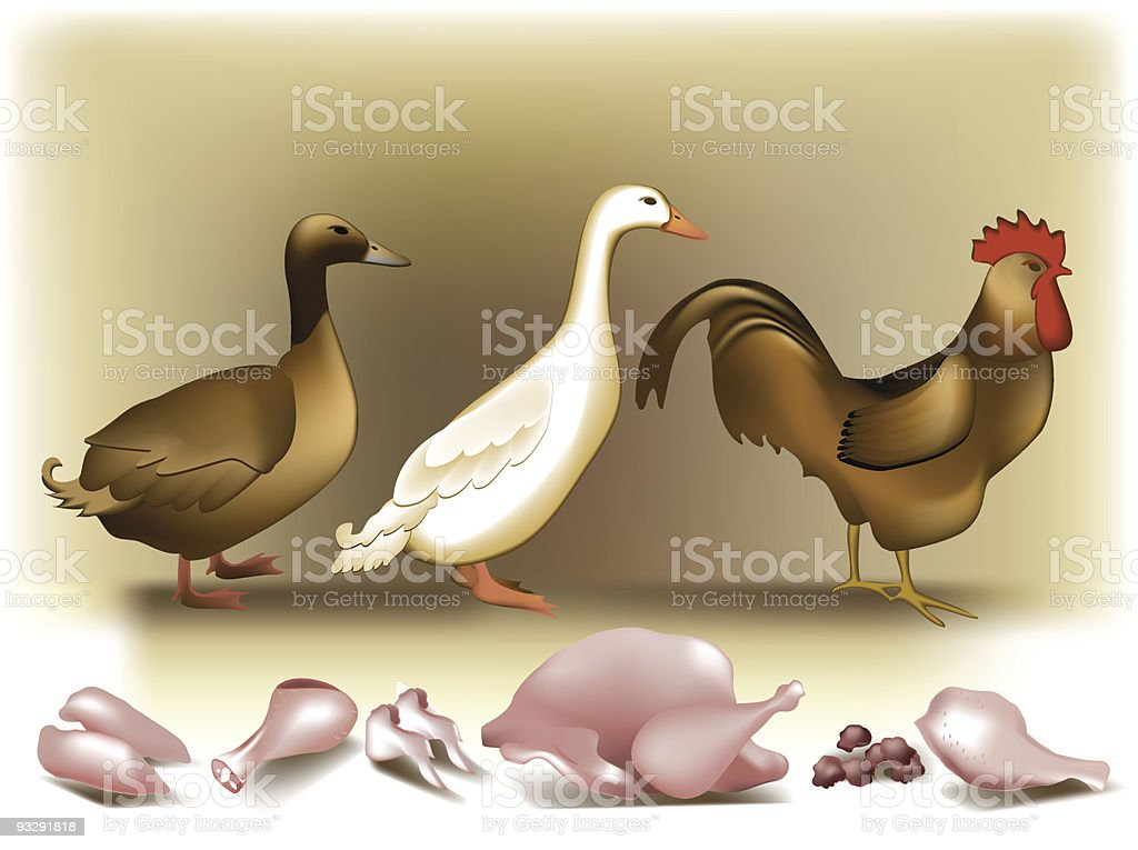 Poultry. vector art illustration