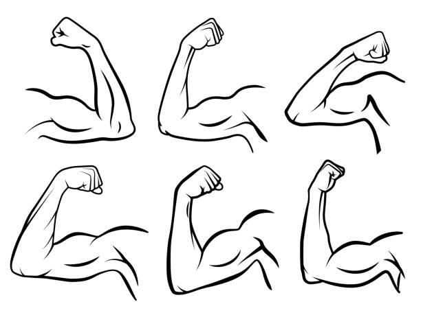 stockillustraties, clipart, cartoons en iconen met krachtige hand spier. sterke arm spieren, harde biceps en handen sterkte overzicht vector illustratie set - menselijke ledematen
