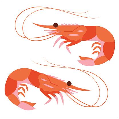 Prawn or Shrimp side view