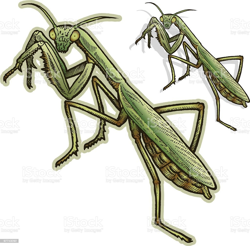 Praying Mantis royalty-free stock vector art