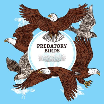 Predatory birds, sketch eagle or falcon
