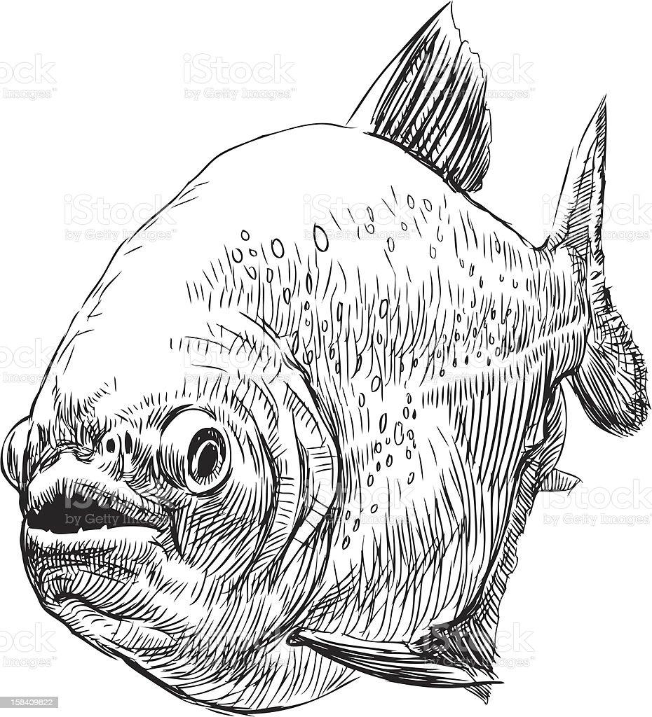 predatory fish royalty-free predatory fish stock vector art & more images of animal scale