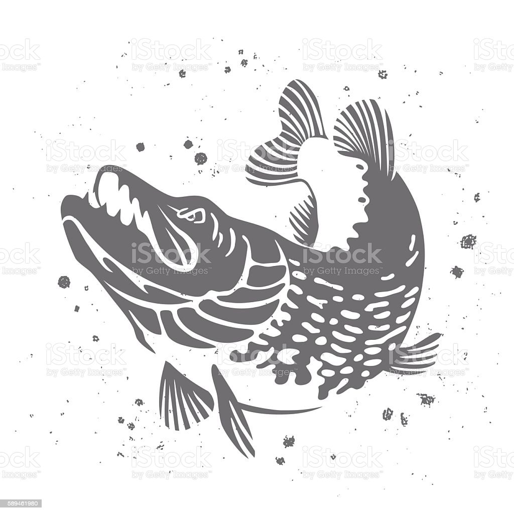 Predatory pike. The stylized image of fish. Vector - Illustration vectorielle