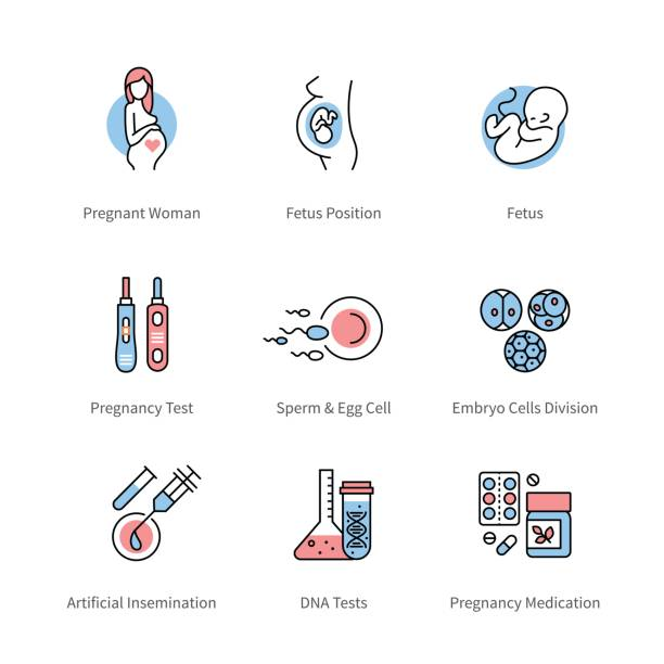 pregnancy, obstetrics and gynecology symbols - family planning stock illustrations, clip art, cartoons, & icons