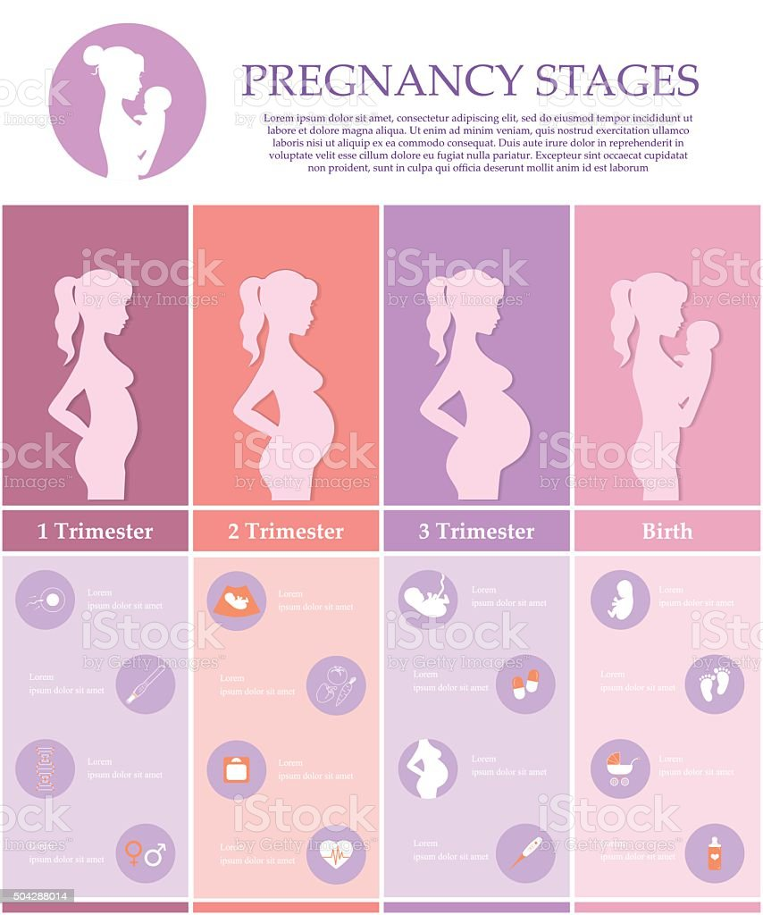 Pregnancy stages, trimesters and birth. vector art illustration