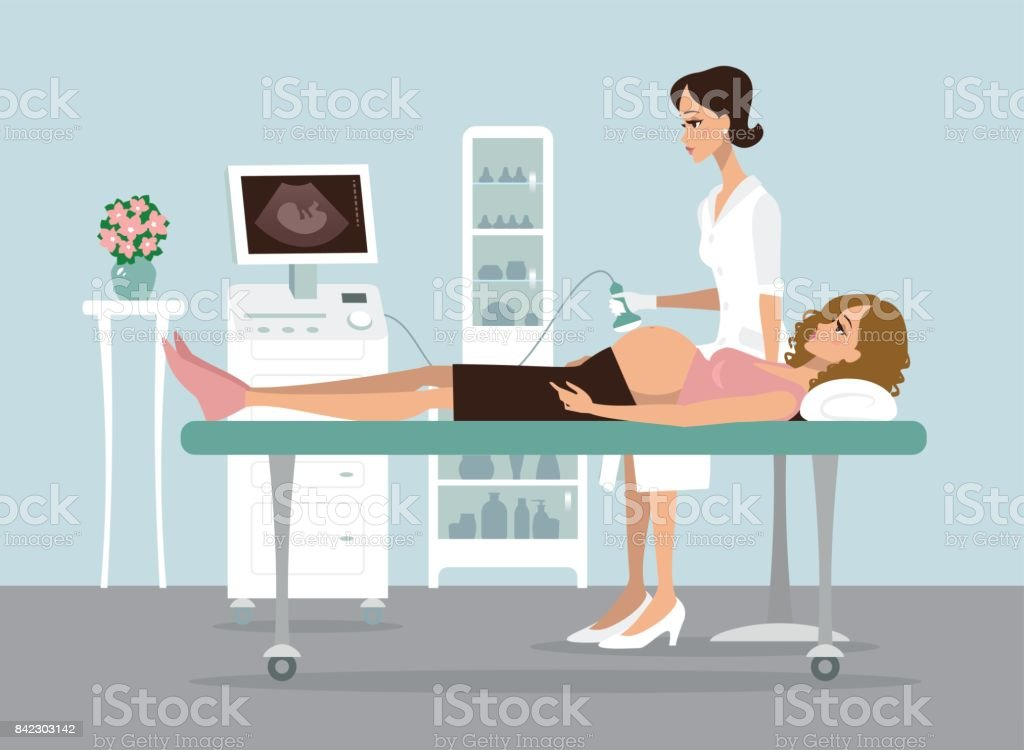 Pregnancy ultrasound screening vector art illustration