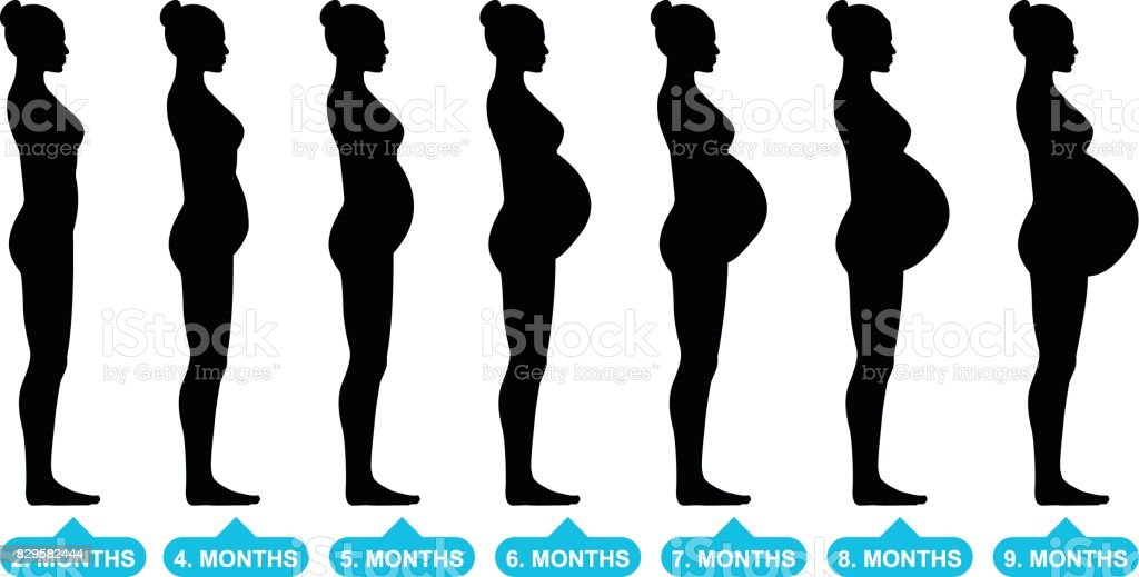 Pregnant female silhouettes vector art illustration